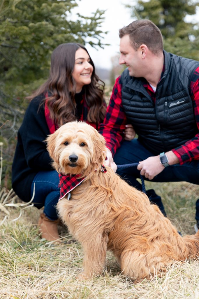 parents of golden-doodle puppy looking at each other while the puppy looks at the camera during tree farm mini session